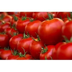 PRECO - Tomates rondes (5...