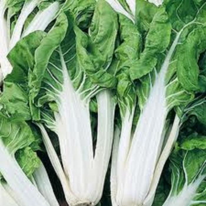 Bettes blanches ( par 10 bottes) - Catégorie ll