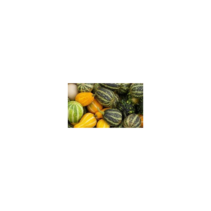 Coloquintes petites (par 10) - Catégorie II