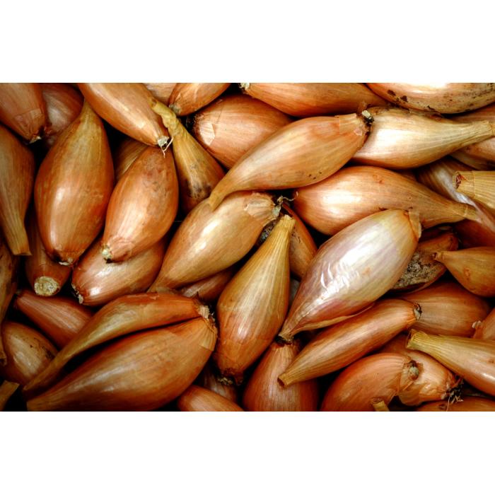 Echalotes vrac (5kg) - Catégorie ll